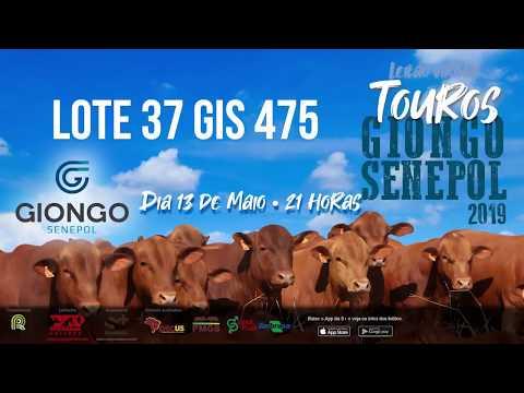 LOTE 37 GIS 475