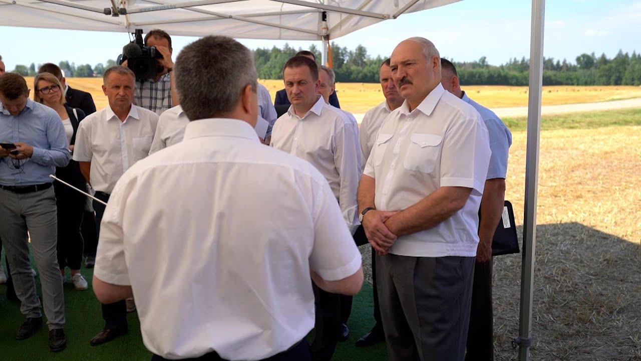 Лукашенко: не надо дергать аграриев на выборы, потерять урожай ради какой-то политики - идиотизм