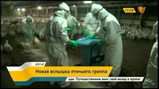 В Японии зафиксированна новая вспышка птичьего гриппа