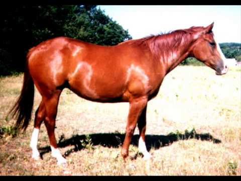 Arabian horse facts and horse riding lessons youtube - Arabian horse pictures ...