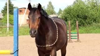 Если бы лошади стали видеоблогерами