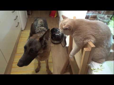 Вопрос: Как примирить кошку и собаку в маленькой квартире?