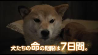 2007年、宮崎県の保健所で起こった犬と人間の奇跡の実話を、20年にわた...