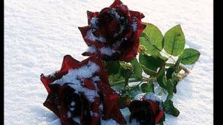 My film Чёрная роза- змблема печали...
