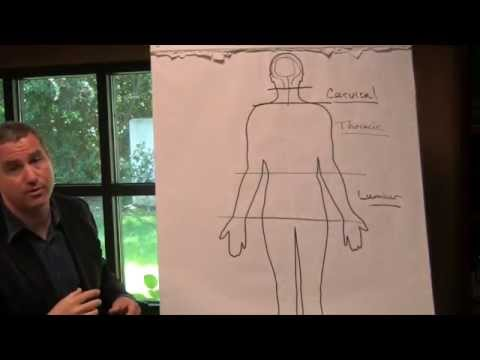 Levels of Spinal Cord Injury Explained by Spinal Cord Injury