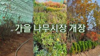 가을 나무시장 개장했습니다♡ - 신라조경농원