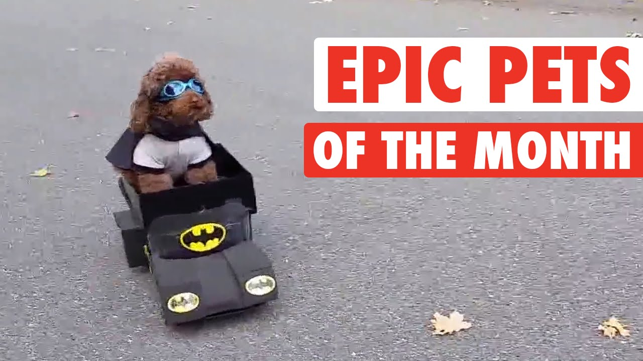 Epic Pets of the Month: The Best Videos from November 2015