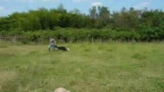 京都府福知山市のみわファームさんで、初めての牧羊犬体験をしました。 ...