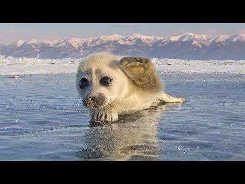 8 สัตว์แรกเกิดที่หน้าตาไม่เหมือนพ่อแม่เลยซักนิ๊ดด