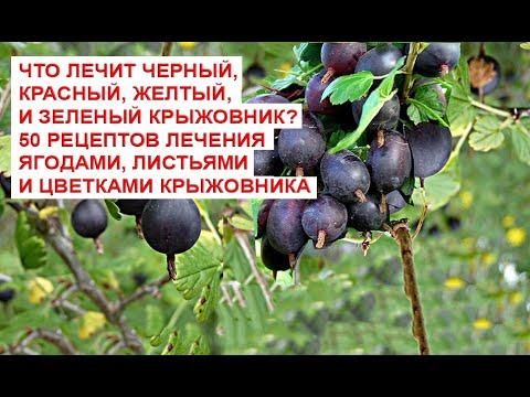 Что лечит черный, красный, желтый, и зеленый крыжовник 50 рецептов лечения ягодами, листьями и цветк
