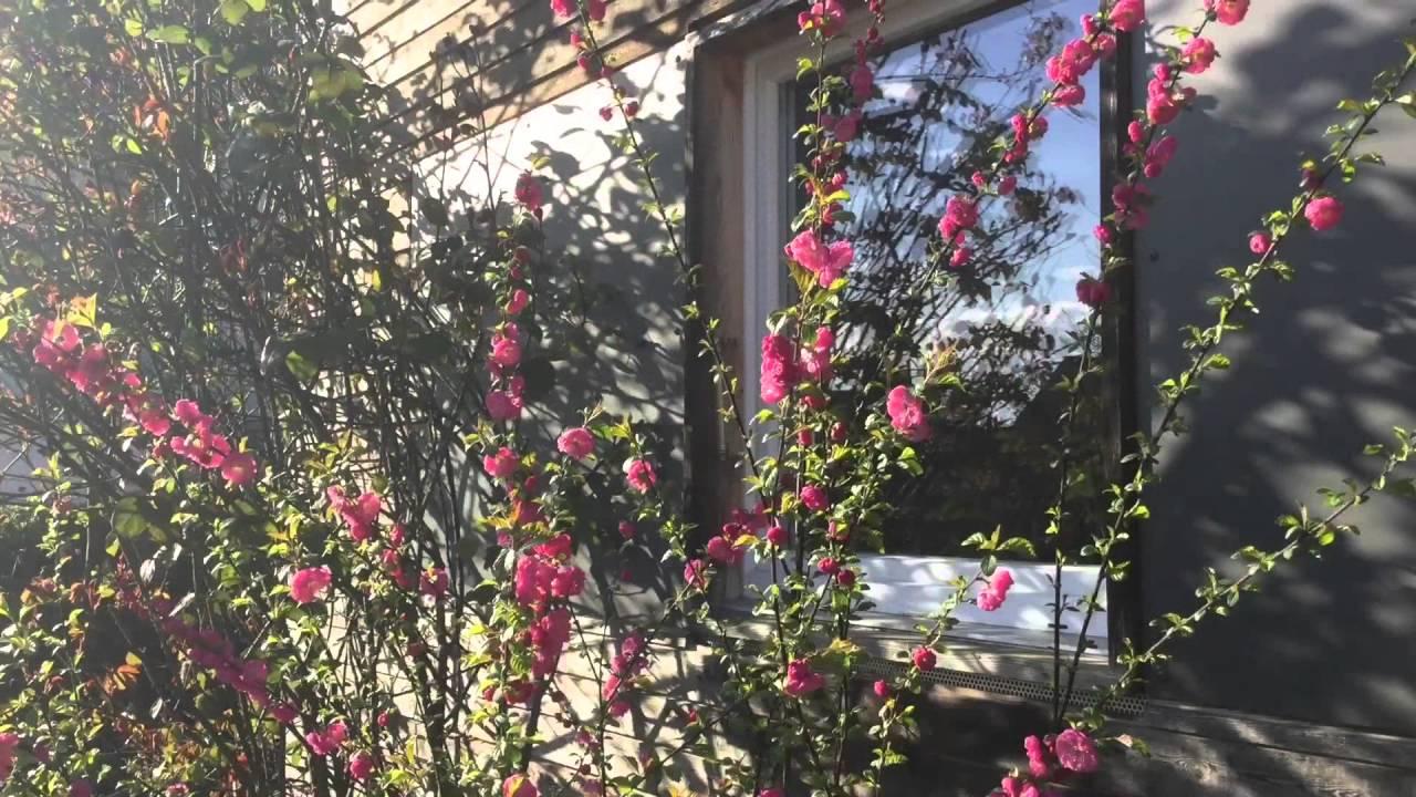 Ein Schweizer Garten Frühlingserwachen Youtube