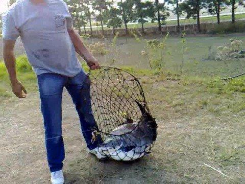 El cultivo de la cachama doovi for Tanques para cachamas