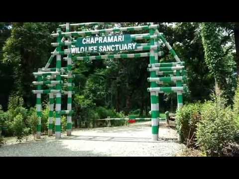 Chapramari Wildlife Sanctuary Forest Check Post | Chapramari Jungle Entrance in Dooars