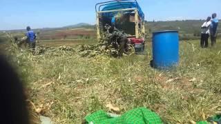 Chaff cutter Kenya