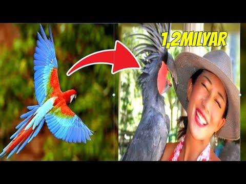 HARGANYA TEMBUS 1,2 MILYAR! 9 Burung Termahal Tercantik Di Dunia