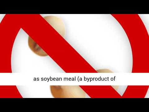 Soy In Horse Feeds – The Silent Antinutrient
