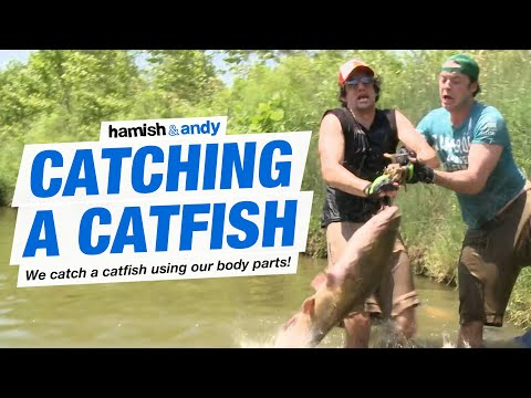 Catching A Catfish
