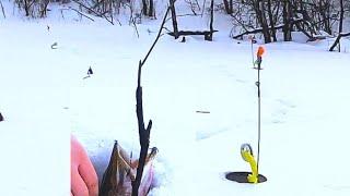 Откуда столько щуки в этом болоте Рыбалка в глухозимье