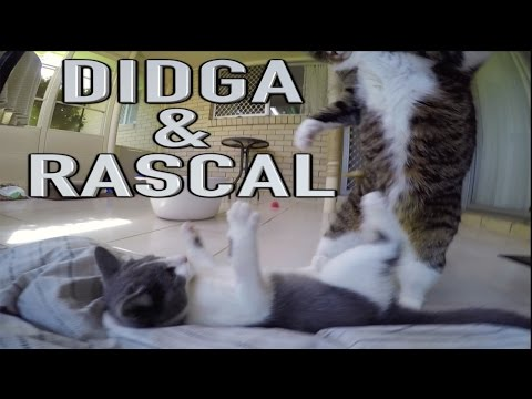 Didga and Rascal Meet Face To Face