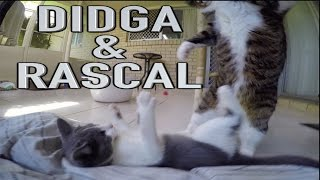 Didga and Rascal Meet Face To Face
