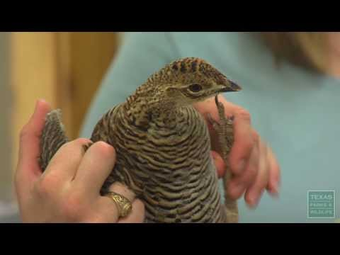 PBS March 23-29, 2014, #2223 - Texas Parks and Wildlife [Official]
