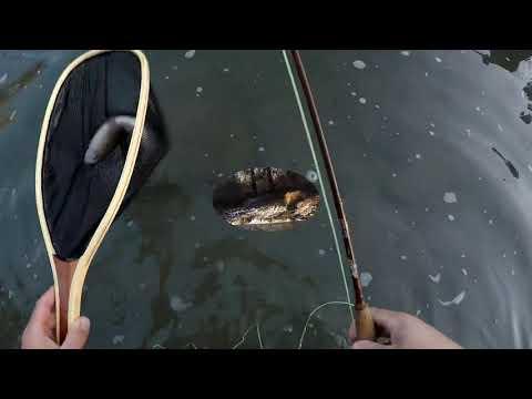 Blue River Tishomingo Oklahoma Trout Fishing