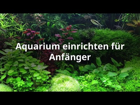 aquarium einrichten schritt f r schritt erkl rt youtube. Black Bedroom Furniture Sets. Home Design Ideas