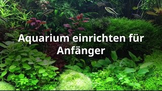 Aquarium einrichten - Schritt für Schritt erklärt