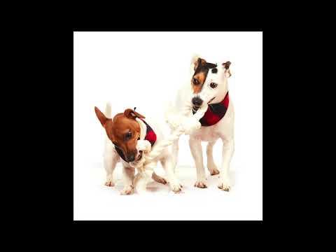 odi-style-dog-bandana-with-dog-rope-toy