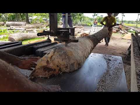 Very Long Teak Wood Cutting by Super Skilled Men।Cutting Teak Wood By Rural Saw Mill।Expensive Wood