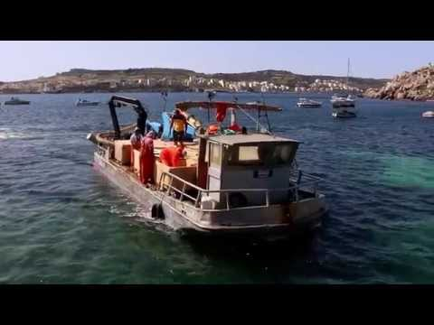 Eat Fresh Fish - Maltese Fish Farming