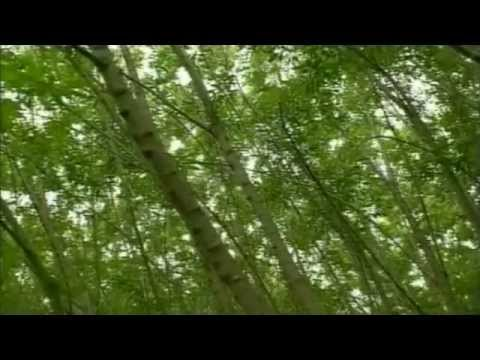 Shrub Willow - Carbon Sequestration & Renewable Energy