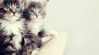 Картинки милых животных
