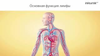 Биология 8 класс Состав внутренней среды организма и её функ