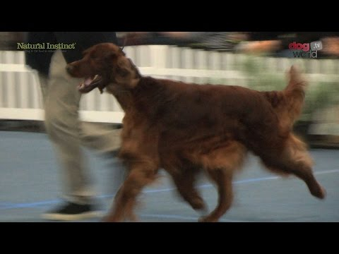 Scottish Kennel Club 2016 - Gundog group Shortlist