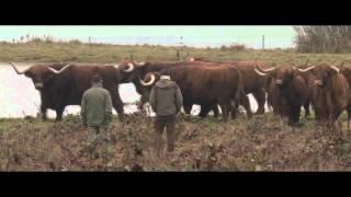 Se videoen: Rewilding - tilbage til naturen