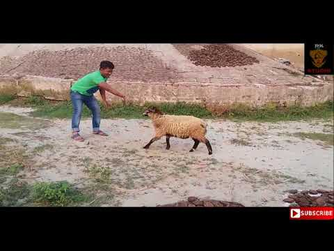 Best Funny Video Ever  |Comedy Funny Video | Rehan Khan Jewel
