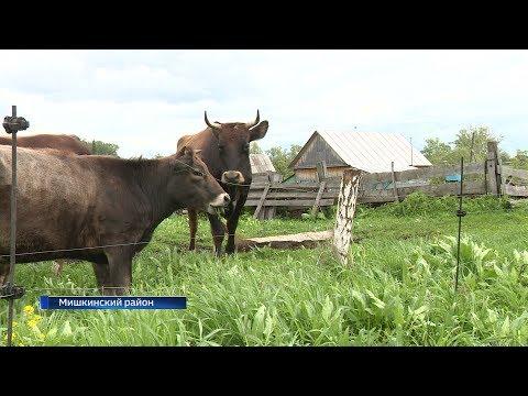 Домашний скот в Мишкинском районе теперь пасёт электропастух