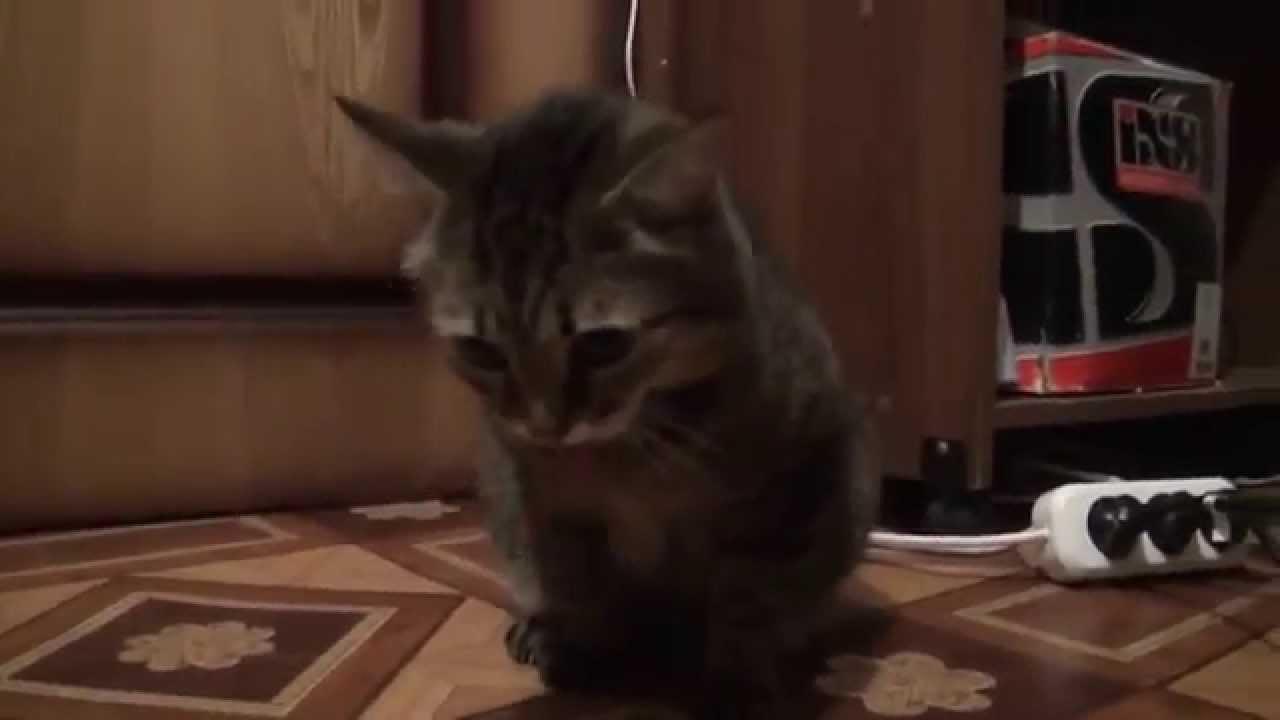 Рыгающий кот гифка