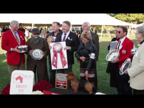 Road to Westminster (RTW): Intro to Montgomery County Kennel Club