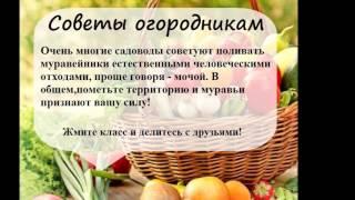 Самые полезные советы для огородников