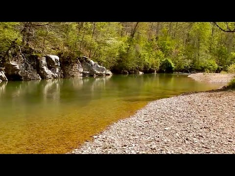 Tennessee CREEK Fishing For GIANT Smallmouth Bass