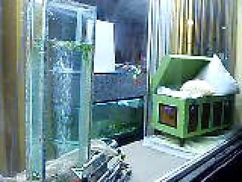 Escaparate dise o con pecera y plasma vertical de agua youtube - Peceras de diseno ...