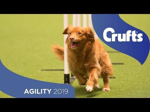 Agility  Team Medium Final - Part 1 | Crufts 2019