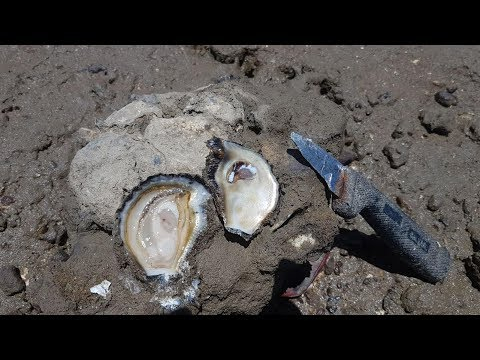 How To Find and Eat Oysters