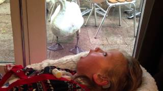 Harriet and the Swan