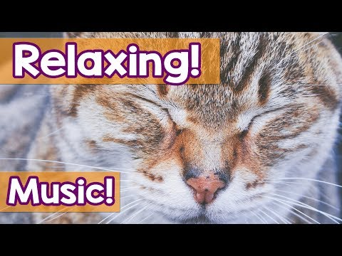 4 Hours! Music for your Cat! Help your Kitty Sleep with This Soothing Lullabies and Tranquil Notes!