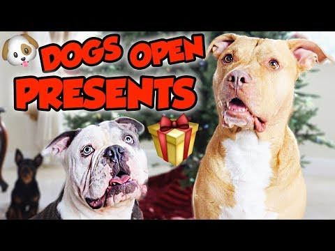MY PETS OPEN CHRISTMAS PRESENTS + What I Got For Chirtsmas   NICOLE SKYES