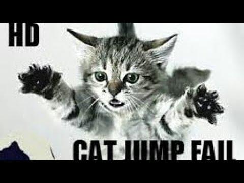Funny Cat vines    Cat Jump Fail    Cat Funny Video   