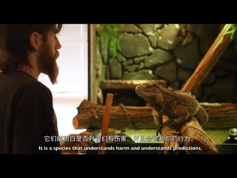 The Expedition for Chinese Reptiles